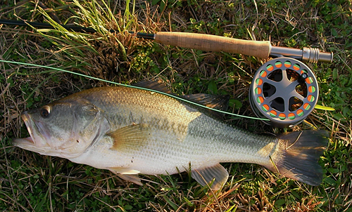 Tomball Golf Course Largemouth Bass