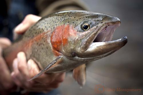 Broken Bow Oklahoma Trout