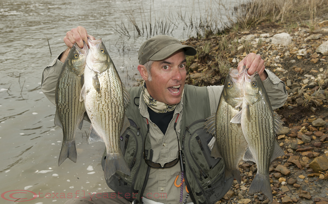 Palmetto bass archives fly fishing in texas fly for Where can i get a fishing license near me