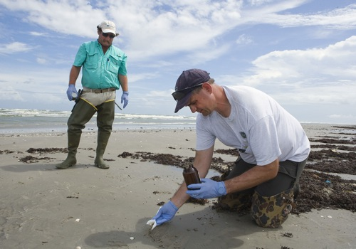 Photograph of samples being taken from Gulf Coast