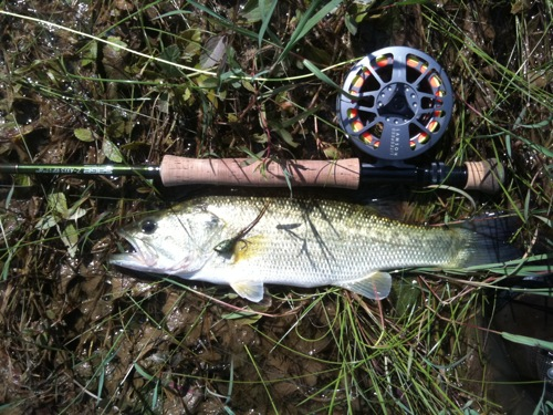 ray roberts largemouth bass