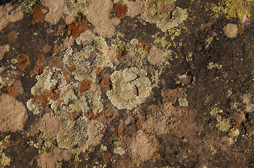 Original image of lichen on rock at location
