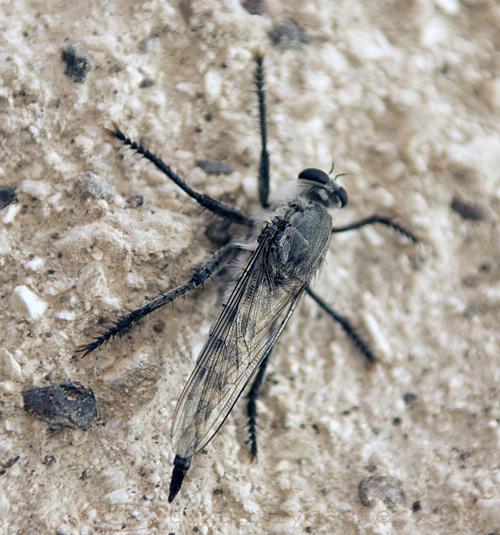 Bug for the entomologists.