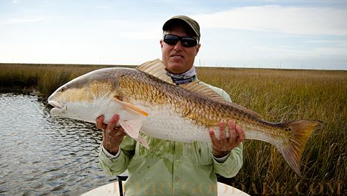 louisiana redfish on fly rod biloxi marshes louisiana 2012