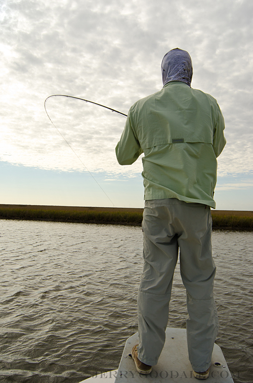 redfish on fly in the louisiana marshes