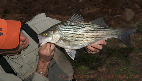 Fly Rod Record for Lewisville Lake Texas
