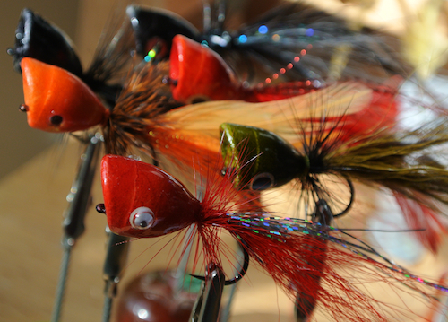 largemouth bass fly fishing popper fly