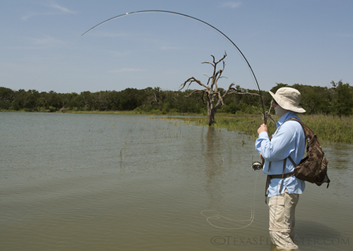 fly fishing for carp in north texas