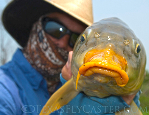 Carp on Lake Ray Roberts