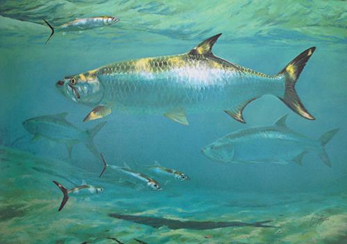 South Padre Island Fishing Calendar