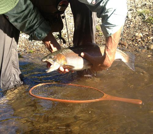 Broken Bow Rainbow Trout 2012 - Courtesy Jim Koukl