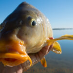 "Friday Food For Thought: Bow ""Hunting"" Carp – Sport or Slaughter?"