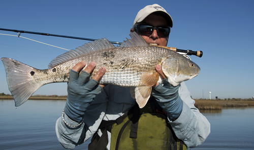 Texas Gulf Coast Redfish on fly rod