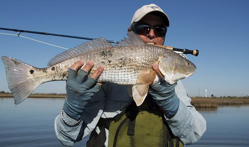 Texas Gulf Coast Redfish on fly rod