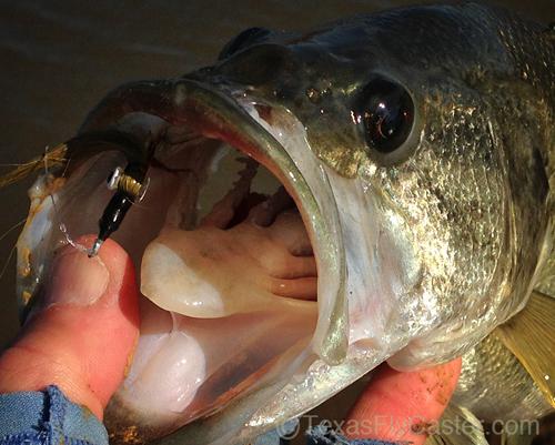 Lake Ray Roberts Texas largemouth bass on fly