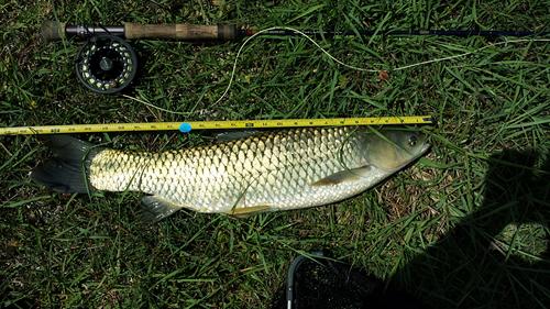 ugliest carp caught by Danny Scarborough