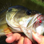 East Texas Fly Fishing – Certainly is All it's Cracked Up to Be