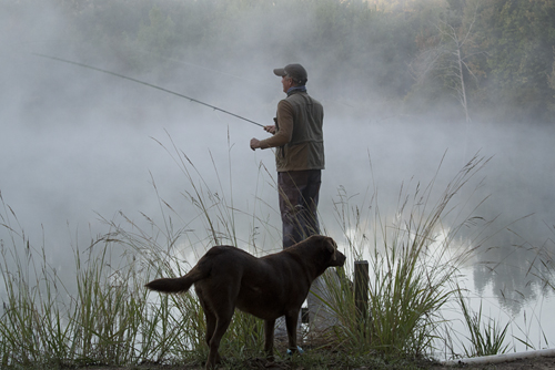 fog and dog by LK