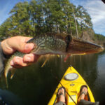 Fly Fishing for Chain Pickerel – Daingerfield State Park Part 2