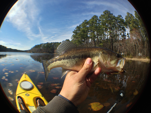 daingerfield largemouth bass - by MM Mendez