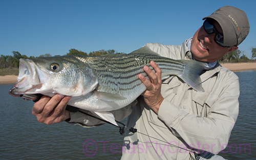 Texoma Striper on Fly – Captain Steve Hollensed Brings Us Up To Date