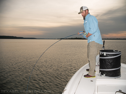 texoma striper on fly texas fly fishing