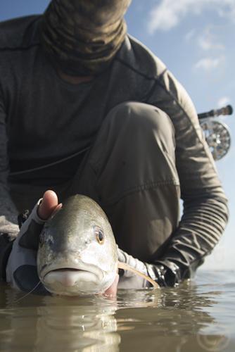 July 27 redfish on fly near slp Galveston fly fishing