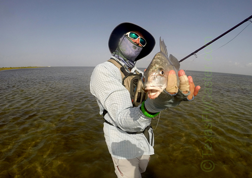 black drum on fly - courtesy photo