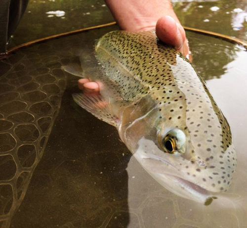 Courtesy Living Waters Fly Shop