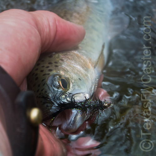 Pecos River New Mexico rainbow trout.