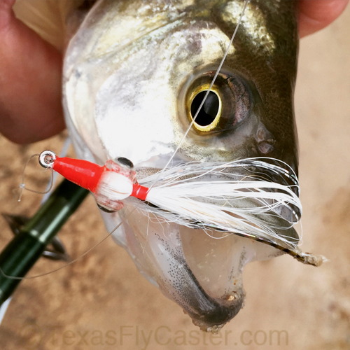 fly fishing for sand bass houston
