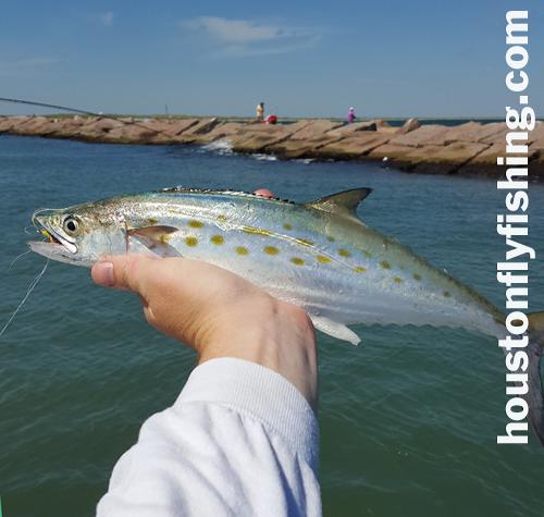 spanish mackerel Lydia Ann Flymasters houstonflyfishng