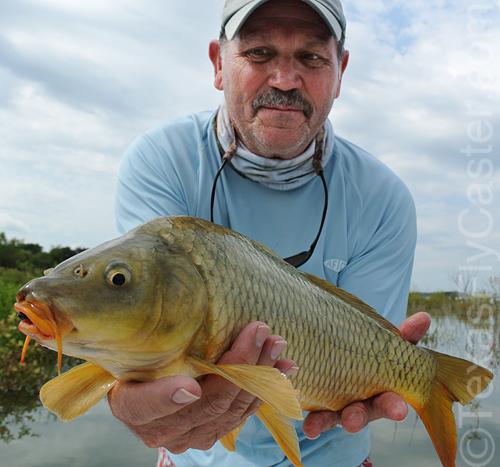 Carp on fly texas fly fishing