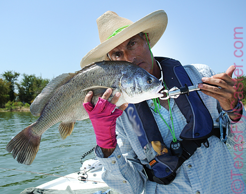 black freshwater drum on fly ray roberts
