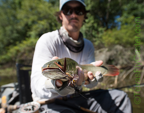 Texas Fly Fishing Bowfin on Fly Lake Conroe