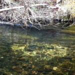 Lower Mountain Fork River Trout Spawning