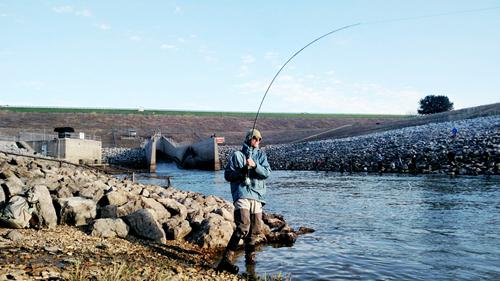 texasflyfishing hybrid bass on fly ray roberts texas guide