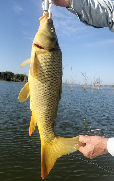Ray Roberts Lake Texas carp on fly. Catch and release only.